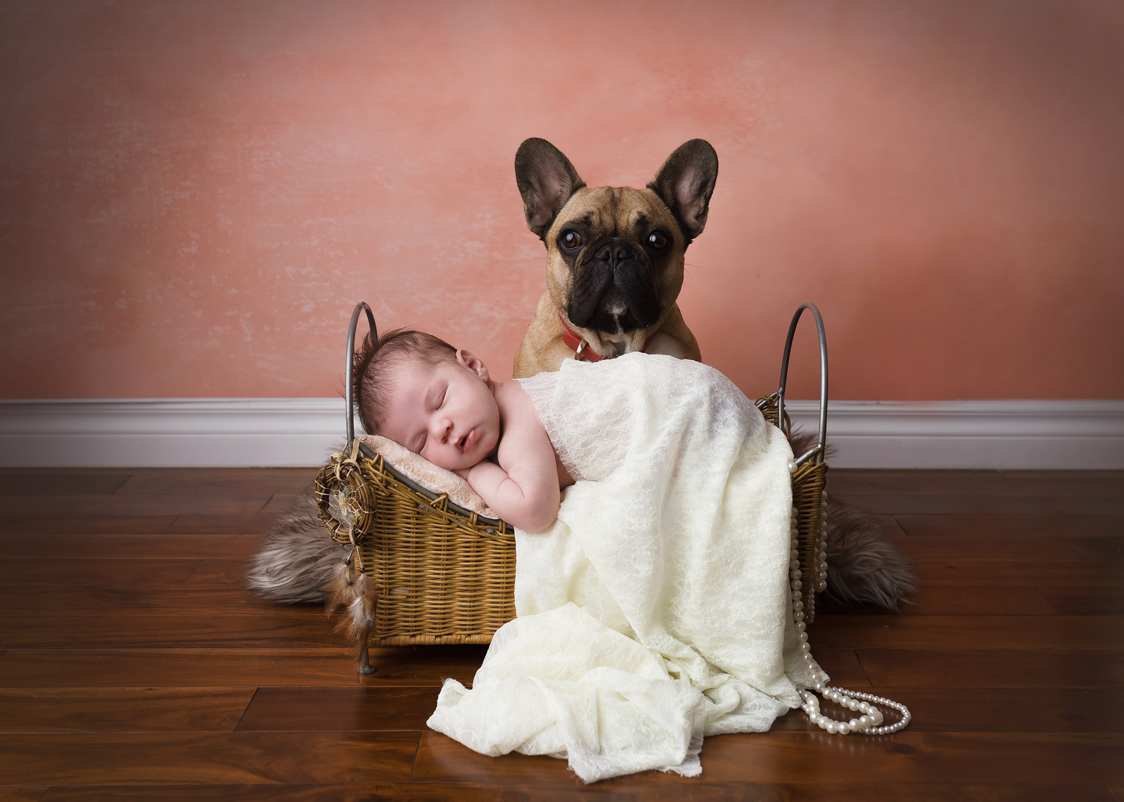 newborn an dog photo